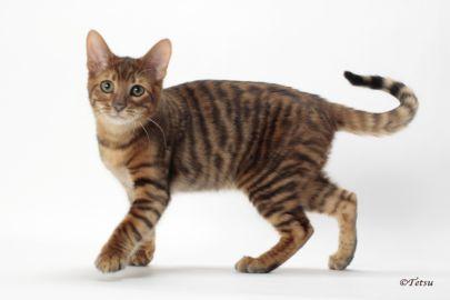 Cat_2_2