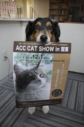 Cat_3_2